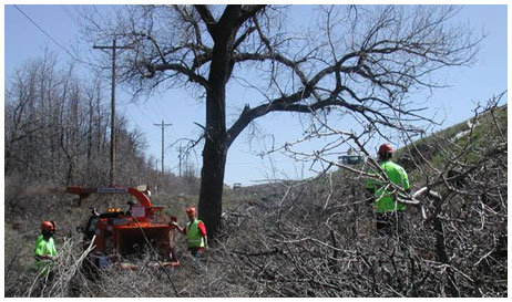 tree care service in denver